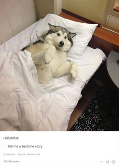 28 Times Huskies Were As Funny As They Are Cute