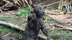 Petition · Save the wild animals held in cruel conditions for sale in Altamira, Brazil · Change.org