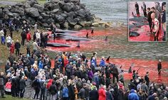 How Faroe Island residents are continuing to slaughter of pilot whales