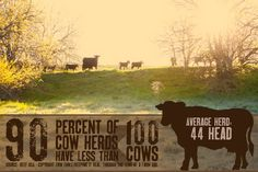 Average herd of cattle Infographic. CRI provides dairy farmers multiple services to assist thier business be profitable http://agsource.crinet.com/page249/DHI or http://genex.crinet.com/page46/Dairy