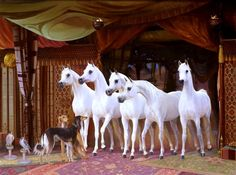 Bedouin Tent with Arabian Horses and Saluki Dogs.