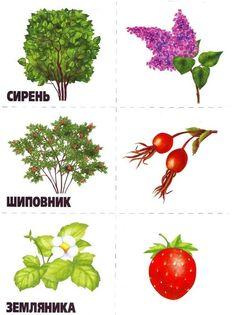 Autumn Activities For Kids, Preschool Activities, Numbers Preschool, Autumn Nature, Fruit Art, Nature Crafts, Autumn Theme, Trees To Plant, Montessori