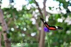 #butterflies    www.facebook.com/photographybybreeanca