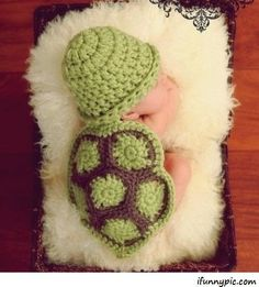 Turtle baby!!!
