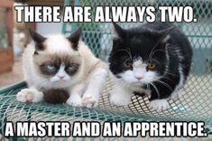 Grumpy Cat Quotes, Funny Grumpy Cat Memes, Funny Cats, Funny Animals, Cute Animals, Grumpy Kitty, Animal Funnies, Animal Memes, Funny Minion