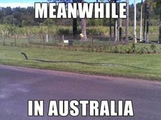 They would be able to hear me screaming in New Zealand.