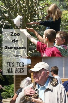 Jurques zoo - fun for all ages