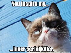 15846bfc12e261fc24157458f8197097 grumpy quotes cat quotes apply water to burned area 14 hilarious grumpy cat memes that