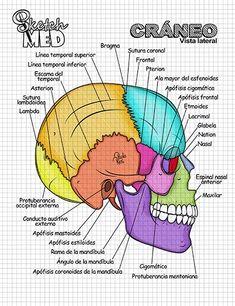 Medicine Notes, Medicine Student, Med Student, Student Studying, Studying Medicine, Medical Memes, Medical Laboratory Science, Nursing School Notes, Medical Anatomy