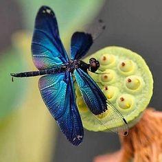 "rosypapatella: ""#nature """