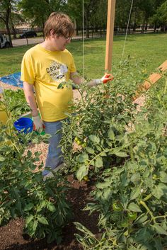 NGB Growing for Futures: Therapeutic Garden for Young Adults with #autism tomato pruning at the Growing Solutions Farm. Donate at www.ngb.org