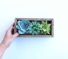Felt succulent box by TheFeltFlowerShop on Etsy