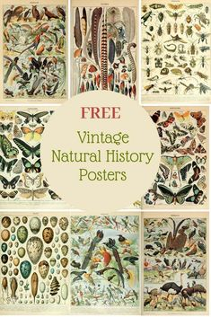 Free Vintage Natural History Posters of Adolphe Millot. History Posters, Nature Posters, History Quotes, History Facts, Art History, British History, Planner Bullet Journal, Eco Deco, Impressions Botaniques