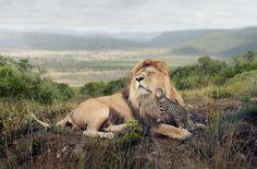 Premio Sony de Fotografía 2014: las impresionantes imágenes finalistas (FOTOS)