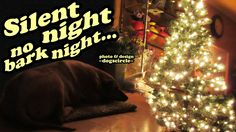 VIDEO of Christmas Dog calm and behave under a lighted Christmas Tree lights