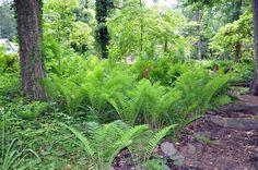 Add a fern garden