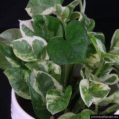 Pin von eva schumann auf garten und pflanzen pinterest for Zimmerpflanzen umpflanzen
