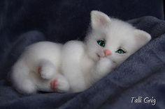 Чудо из ничего - Котёнок Снежок.