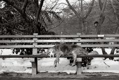 Cooper, 15 years old, resting in Central Park at 72nd Street