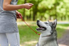 Learn which basic dog training commands every dog should know. These can help you to overcome common dog behavior problems and will help keep your dog safe. Basic Dog Training, Training Your Puppy, Potty Training, Training Dogs, Training Classes, Crate Training, Training Online, Training Schedule, Training School
