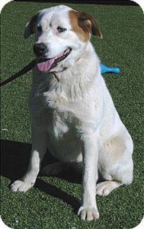 #BirminghamAL - Meet Marble a dog for adoption #TheGBHS