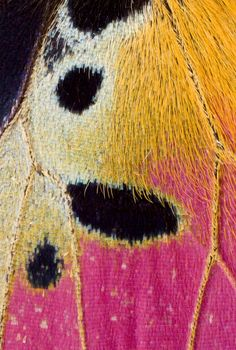 Best Photography Macro Texture Butterfly Wings 69 Ideas - Rebel Without Applause Macro Photography Tips, Winter Photography, Amazing Photography, Levitation Photography, Exposure Photography, Beach Photography, Abstract Photography, Patterns In Nature, Textures Patterns