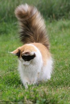 that tail!