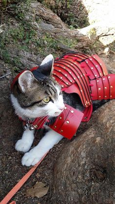 Samurai Pet Costumes Bring Out the Loyal Warrior in Your Furry Friend Cute Cat Costumes, Pet Costumes, Cute Little Kittens, Cute Cats, Crazy Cat Lady, Crazy Cats, Cat Armor, Leather Dog Collars, Gifts For Pet Lovers