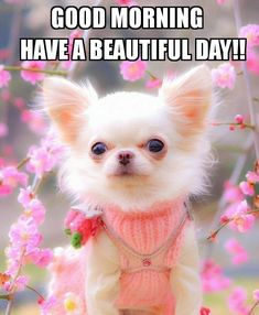 Gif Pictures, Have A Beautiful Day, Good Morning Quotes, Good Day, Cute Dogs, Teddy Bear, Nice, Cards, Animals