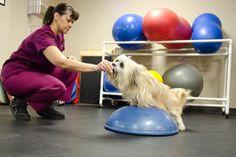 Georgia Veterinary Rehabilitation, Fitness and Pain Management