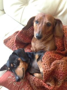 Sophie and Fritz  --  my dachshunds.
