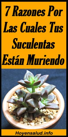 Succulent Arrangements, Succulents, Suculentas Interior, Plantas Bonsai, Garden Online, Pubs And Restaurants, Cannabis Plant, Green Garden, Go Green