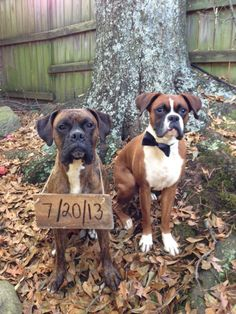 Save the Date!! dogs and boxers love love love!  Love my Cash and Floyd so much!! :)
