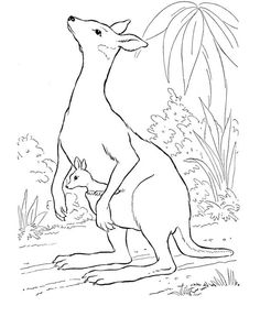 Printable Kangaroo Coloring Page Free PDF Download At Coloringcafe Pages