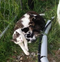 Two Brothers Feed a Fearful Feral Cat, Months Later, She Brings Her Babies to Meet Them - Love Meow Found Cat, Cat Reference, Sweet Stories, Feral Cats, Two Brothers, Pet Care, Baby Love, Cats And Kittens, Cat Lovers