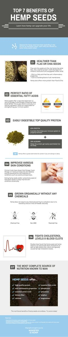 Discover the top benefits of hemp seeds. Our infographic shows why everyone should eat hemp seeds everyday. Hemp seeds are healthy for your body, improves your skin condition, and good for the planet.
