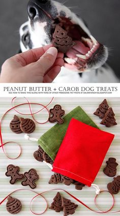 """Healthy Dog Treats {RECIPE} Peanut Butter and Carob Christmas Dog Treats - """"Chocolate"""" and peanut butter? These easy Christmas dog treats swap the chocolate for dog-friendly carob in an easy and delicious recipe. Puppy Obedience Training, Basic Dog Training, Training Dogs, Dog Biscuit Recipes, Dog Food Recipes, Homemade Dog Cookies, Positive Dog Training, Easiest Dogs To Train, Healthy Dog Treats"""