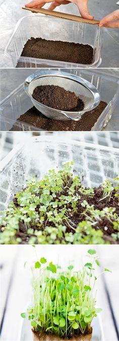 Microgreens The Salad You Can Grow Inside