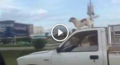 O Cão Mais Radical De Sempre!!! http://www.shocktv.biz/cao-mais-radical-sempre/