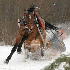 Majestic Beauty Arabian and Andalusian Horses pics] Dashing Through The Snow, Andalusian Horse, Arabian Horses, Winter Scenery, Horse Photos, Animals Photos, Christmas Animals, Horse Riding, Four Legged