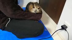 Cute Wild Animals, Cute Little Animals, Animals And Pets, Bird Facts, Owl Eyes, Baby Owls, Cute Owl, Cute Animal Pictures, Beautiful Creatures
