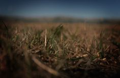 long exposure grass shot Long Exposure, Grass, Photography, Photograph, Grasses, Fotografie, Photoshoot, Fotografia, Herb