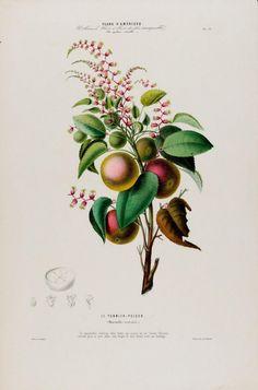 flore-damerique-etienne-denisse-21