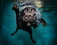 "Hahahaha ""Dogs Under Water"""
