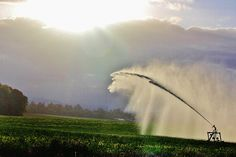 North Plains, OR @  Sprinklers and the setting sun....