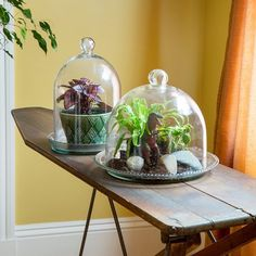 Amazon.com: Achla Designs Bell Jar Terrarium III: Patio, Lawn & Garden