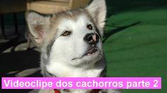 Animais de estimação - Vídeoclipe dos cachorros parte 2