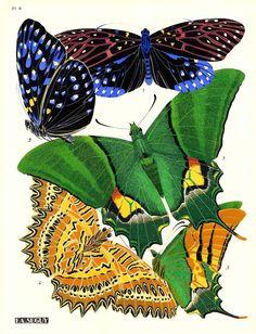 Eugene Seguy 1924 French Butterfly Print Plate 6,eugene seguy,butterfly,entomology,antique print,insect,diptera,retro,papilio,art deco,art nouveau,papillon,morpho,specimen,decorative art,pochoir,exotic,scientific,french design,nature,butterfly print,french print