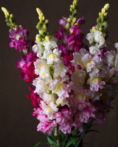 Printer Projects New York Tropical Flowers Arrangements Succulents Artificial Flower Arrangements, Artificial Flowers, Vintage Flowers, Pretty Flowers, Simple Flowers, Snapdragon Flowers, Gladiolus, Biennial Plants, Garden Bird Feeders