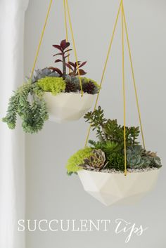 DIY- putting together a hanging succulent basket plus tips on keeping the succulents alive :-).